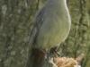 catbird (1 of 1).jpg