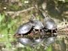 turtle (1 of 1).jpg