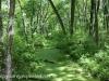 wetlands (4 of 12).jpg