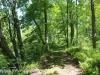 wetlands (5 of 12).jpg