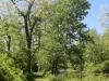 wetlands (9 of 12).jpg