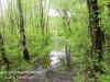 PPL Wetlands -1
