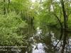 PPL Wetlands -17
