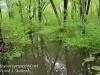 PPL Wetlands -2