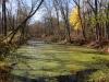 PPL Wetlands -13