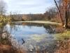 PPL Wetlands -14