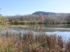 PPL Wetlands -15