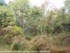 PPL Wetlands (6 of 37)
