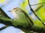 PPL Wetlands wildlife June 3 2017