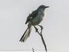 Copamarina day four morning walk birds (10 of 16)