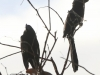 Copamarina day four morning walk birds (14 of 16)
