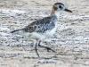 Copamarina day four morning walk birds (4 of 16)