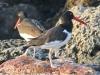 Copamarina day four morning walk birds (7 of 16)