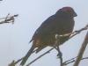 Copamarina day four morning walk birds (9 of 16)