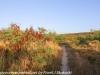 Copamarina day four morning walk (10 of 49)