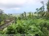 Puerto Rico Day Six Drive Rain forest Inn February 13 18 (6 of 22)