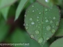 raindrops May 27 2015