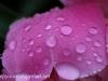 Rainy day macro walk (17 of 29).jpg