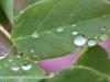 Rainy day macro walk (4 of 29).jpg