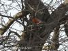 Robin 2 (5 of 16).jpg