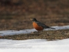 Robin 2 (9 of 16).jpg