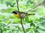 State Game lands 119 birds June 18 2017