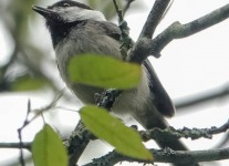 State-game-lands-birds-1-of-33