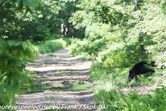 State Game Lands 119  hike bear June 23 2019