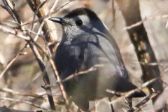 State Game lands 119 hike birds may 3 2020