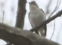 State-game-lands-dennison-Township-birds-1-of-36