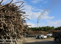 sugar cane (1 of 1)-2.jpg