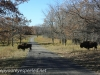 North Dakota Buffalo   (9 of 10)