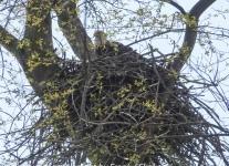 Susquehanna-Wetlands-birds-1-of-24