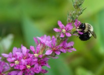 Susquehanna-Wetlands-insects-1-of-18