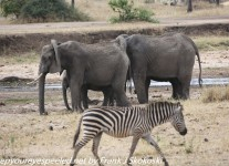 Tanzania-Day-Seven-Tarangire-elephants-3-of-31