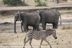 Tanzania Day Seven Tarangire  Elephants, Cheetahs and lions