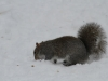 squirrels-and-turkey-019
