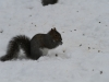 squirrels-and-turkey-023
