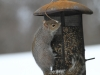squirrels-and-turkey-030