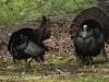 turkey (1 of 16).jpg