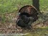 turkey (12 of 16).jpg