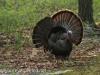 turkey (13 of 16).jpg