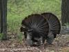 turkey (15 of 16).jpg