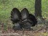 turkey (16 of 16).jpg