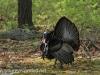 turkey (3 of 16).jpg
