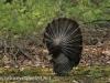 turkey (4 of 16).jpg