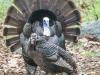 turkey 6 (1 of 1).jpg