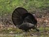 turkey (7 of 16).jpg