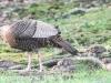 turkey 019 (1 of 1).jpg
