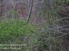 Weatherly railroad Penrose hike April 23 2016-3